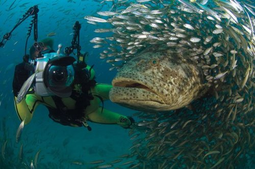 photographerandgoliathgrouper.jpg